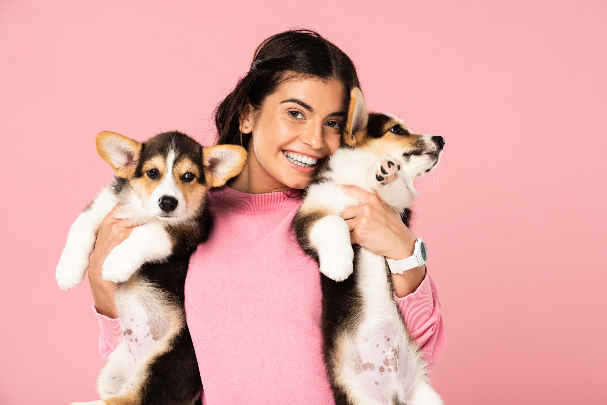Attractive woman holding Welsh Corgi puppies, isolated on pink