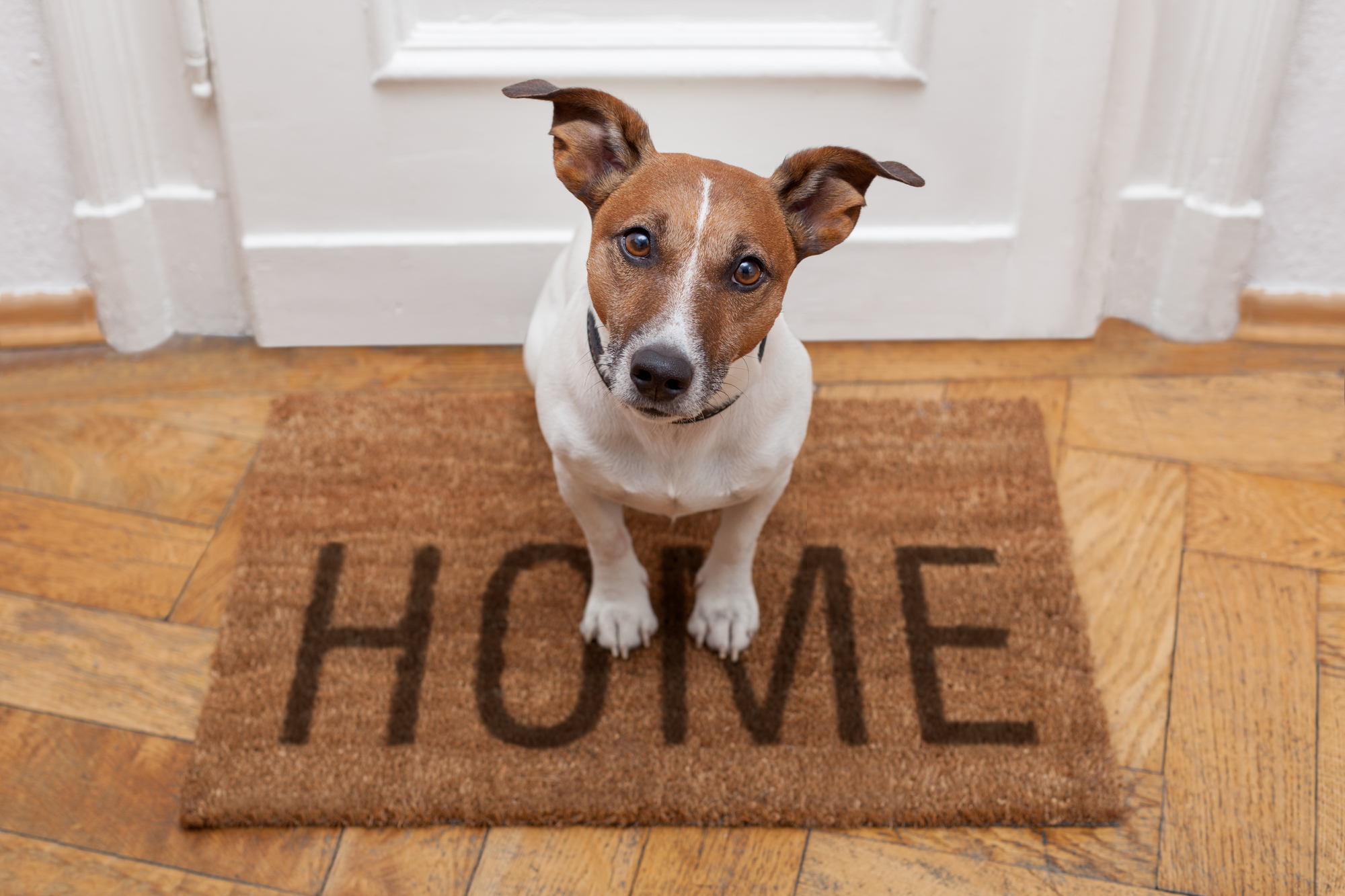 A white and brown dog standing on a mat that says home Tenant Screening