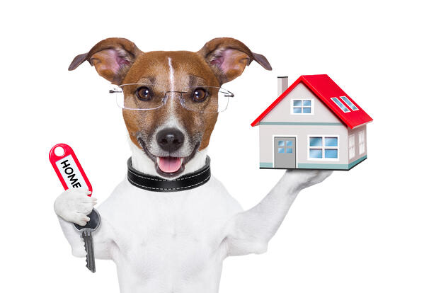 A dog wearing glasses, holding a model house in one paw and keys in the other Real Property Management